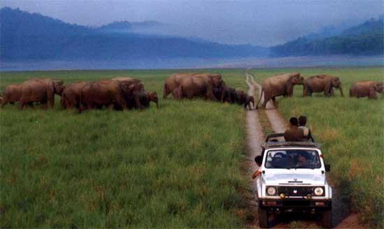 5JimCorbettjeep_safari