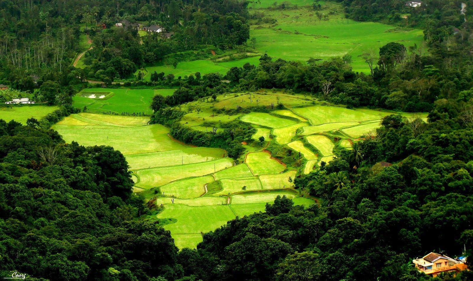 coorg-landscape