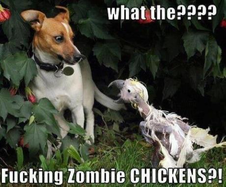 Funny-dog-Zombie-chicken