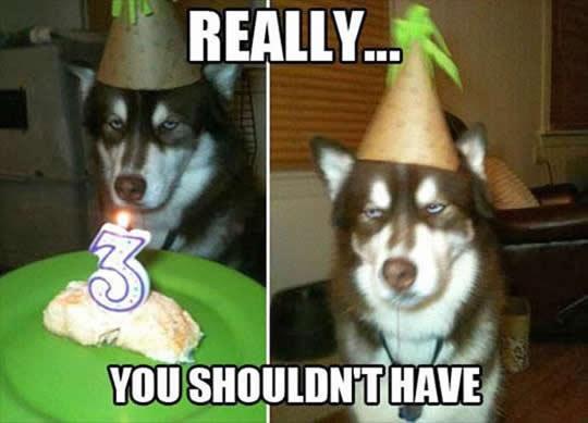 funny-dog-birthday-cake