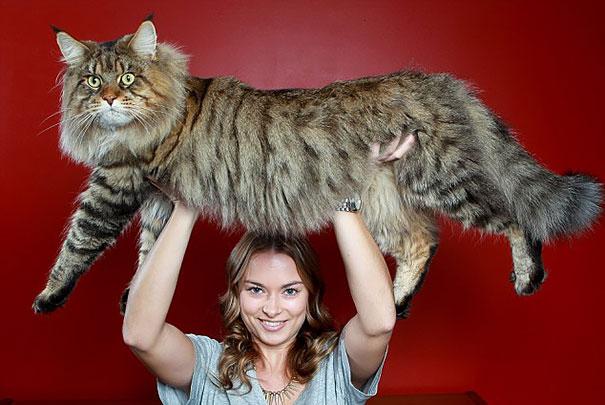 huge-cats-10__605