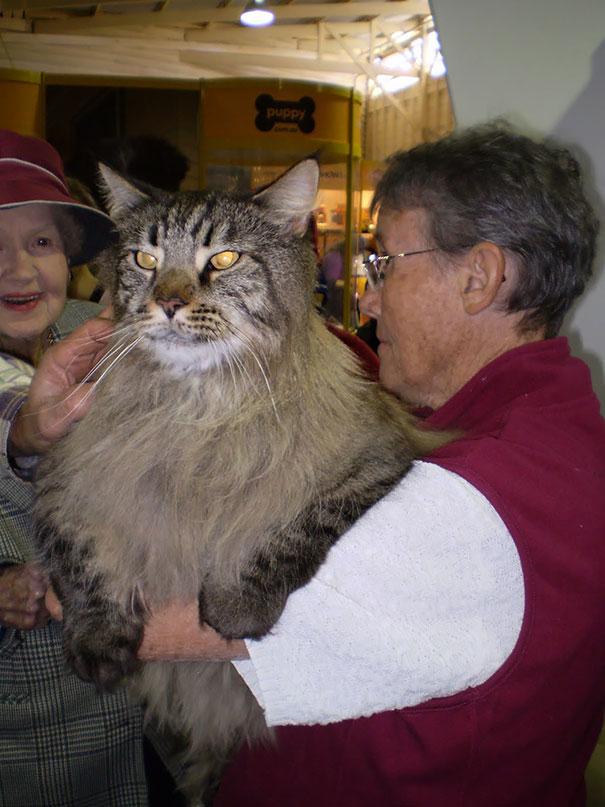 huge-cats-20__605
