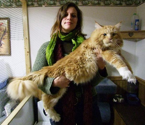 huge-cats-7__605