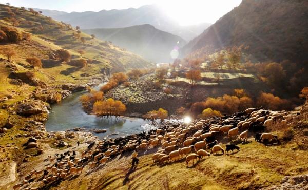 palangan-kurdistan-iran-shepherd
