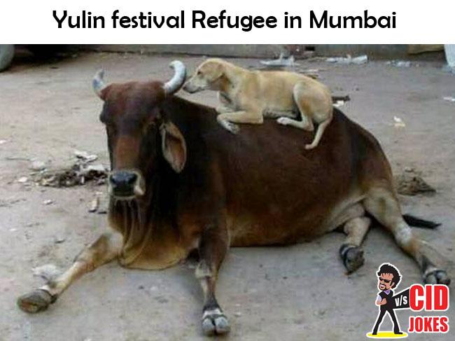 Yulin festival Refugee in Mumbai