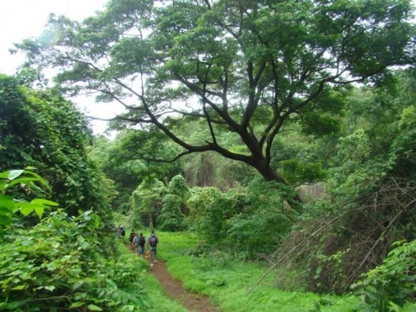sanjay-gandhi-national-park-big-image-1-nature-knights_1433338920_725x725