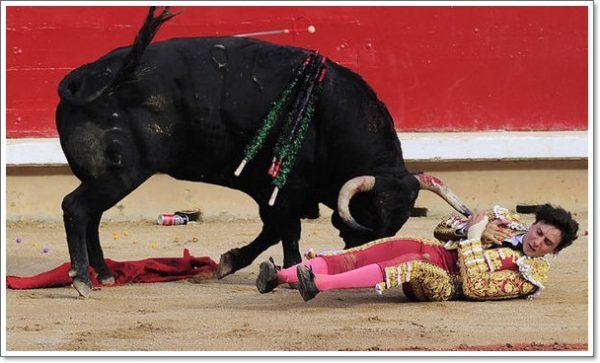 Bull-589011