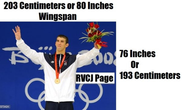 Physical Dimention of michael phelps
