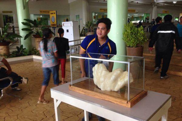 biggest pearl philipines display