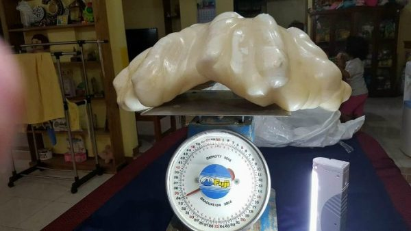 biggest pearl philipines weight