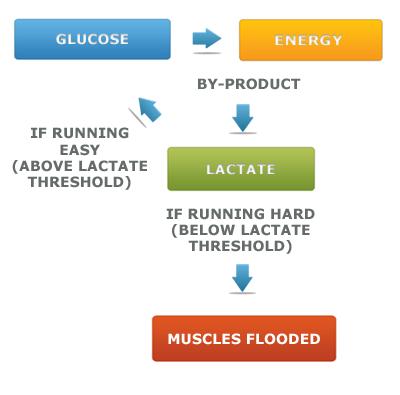 how-lactic-acid-works1
