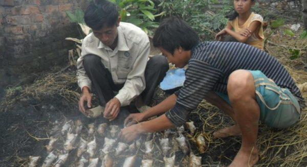 dead-rats-jakarta-government