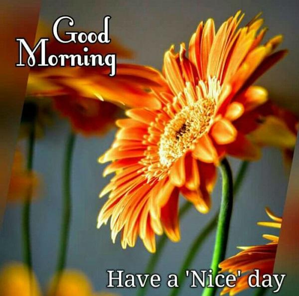 Good Morning Whatsapp Message Rvcj Media