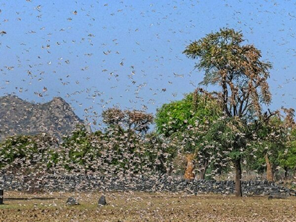 Arnab Goswami Says Pakistan Is Behind Locust Swarms In India, Gets Badly Trolled On Twitter