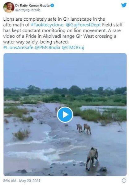 guj lion update fake